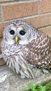 Closeup image of baby owl